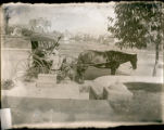 Woman in horse-drawn carriage, Los Angeles