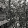 Humanities Building and trees, Scripps College