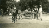 Students with donkeys and cart, Pomona College