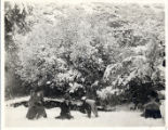 Pomona College Students Playing in Snow
