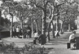 Art students on Elm Tree Lawn, Scripps College