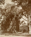 College Avenue, two students walking, Pomona College