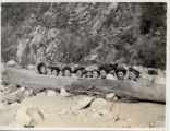 Women behind a log, Pomona College