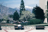 Blooming trees, Claremont McKenna College