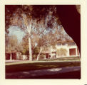 Trees standing near buildings, Claremont McKenna College