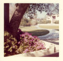 Flowering plant, Claremont McKenna College