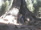 Cavity in a sequoia at Lost Grove