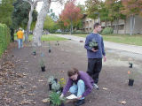 Student placing plants for Landscape Demonstration Garden, Harvey Mudd College