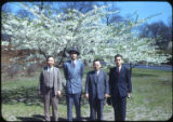 Four men standing near blooming trees, 1951