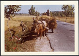 Oxcart, 1959-12