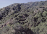 Chaparral Sawpit Canyon
