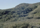 Chaparral slope