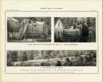 Plate 7. Stump and Log of the...